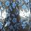 Thumbnail: Hydrographics Film H2O-PCPL-FL-03-1 (0.5m width x 2m roll)