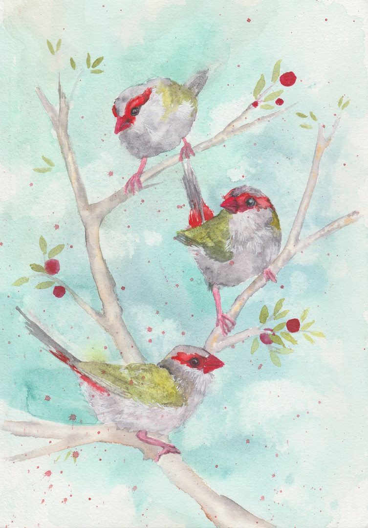Festive Redbrowed Finches