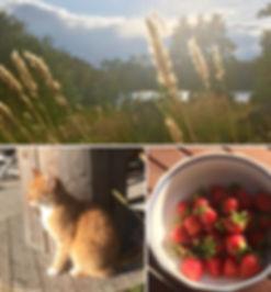 Kesä ja mansikat.jpg