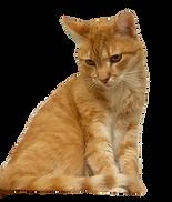 The cat - kissa.png