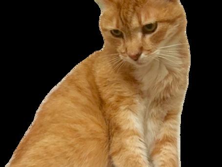 - Häntä pystyyn ihminen, sanoi Roope-kissa Kalevalan päivänä