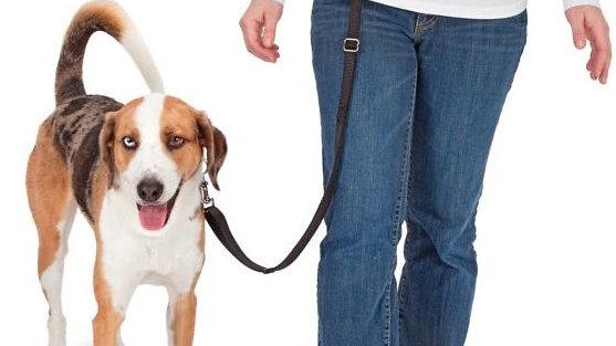 PetSafe Hands Free Dog Leash