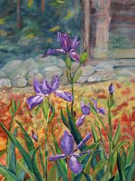 Japanese Roof Irises