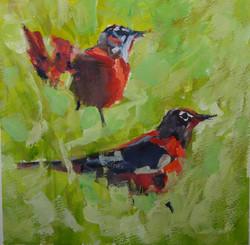 Robins in the Yard