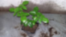 """Питомник растений """"Ягодки-цветочки"""" корнесобственные розы"""