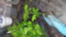 """Питомник растений """"Ягодки-цветочки"""""""