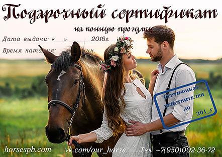 Сертификат на катание на лошадях СПб