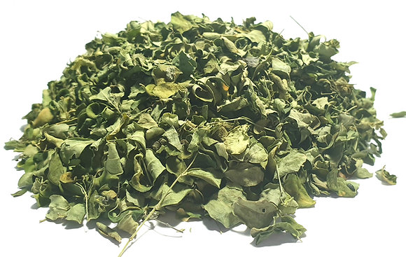 feuille de moringa oleifera