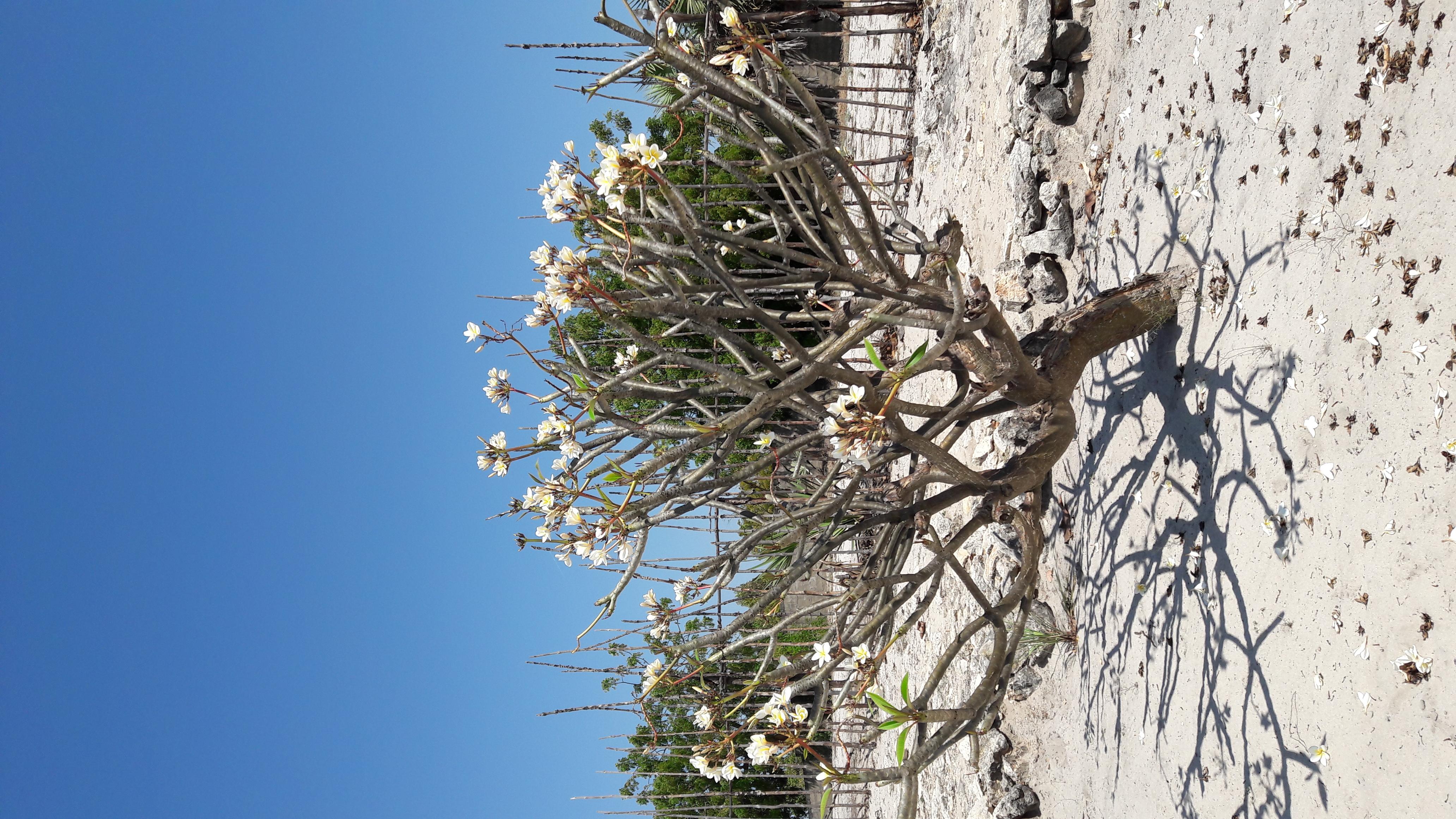arbre plante blanche
