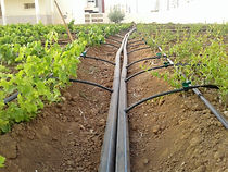 Drip Irrigation Pipes.jpg