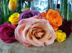 multi rose.JPG