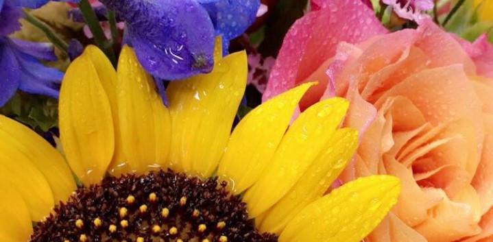 lupesunflower.jpg