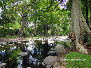 Chinnar Wildlife Sanctuary and Megalithic monuments: Marayoor
