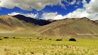 9. Tso Moriri - through the no-man's land: Mesmerizing trip to the Himalayas