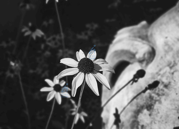 Flowers - Black and white