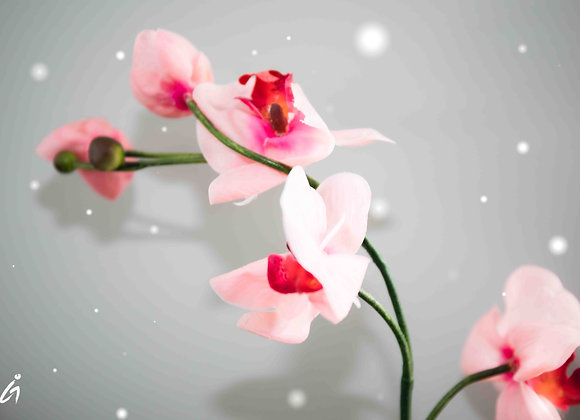 OrchidSnow