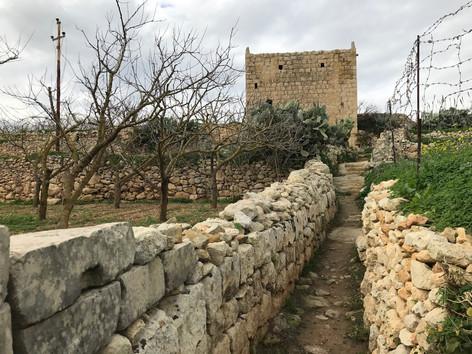 Vineyard and Stone Tower