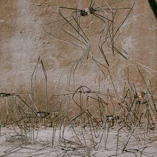 пауки / spiders