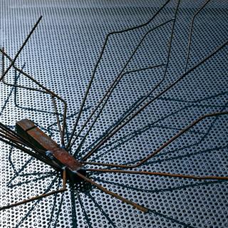 комары / mosquitos