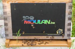 Moulan 2019 (4)