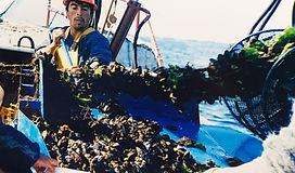 ムール貝漁獲写真