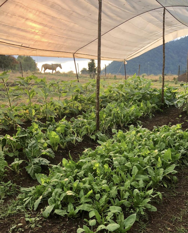 Hortaliza de rancho Las Palomas