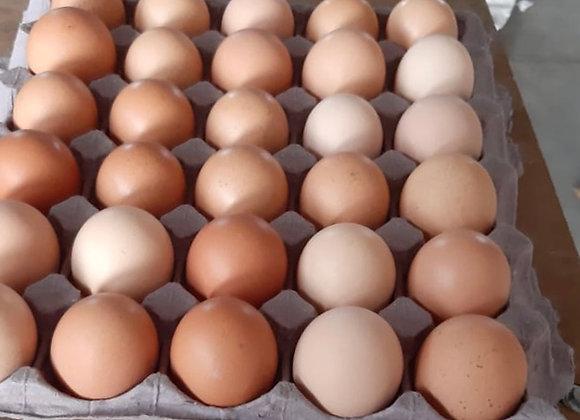 Huevo orgánico 30 piezas