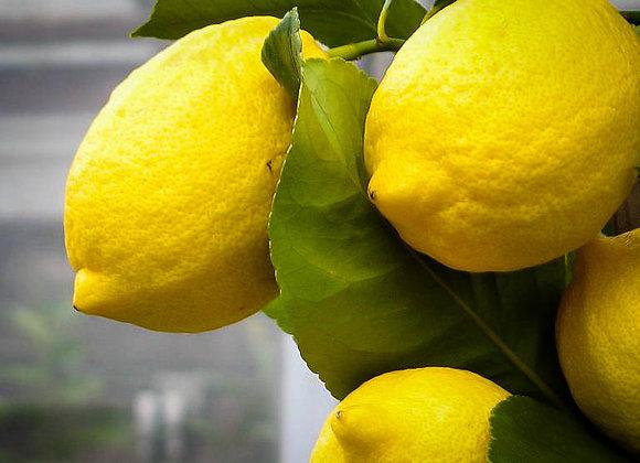 Limón Eureka kilo y medio