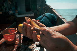 Docureeks: Oostendse vissers