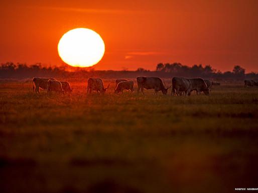 Fair Ranching