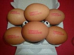 Huevos camperos 6 Unitats