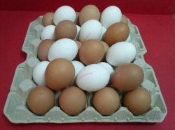 Huevos XXL