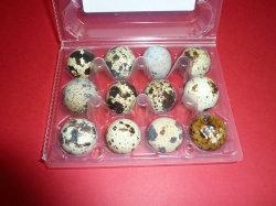 Huevos de codorniz