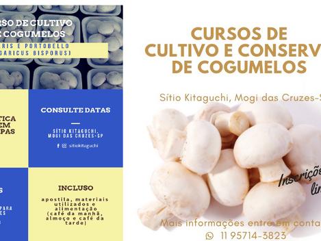Curso de Cultivo de cogumelos - 22 de junho de 2019 - Sitio Kitaguchi. Informações 11-4792 2424 / 99