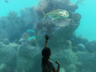 Family Fun at Daydream Island Resort, Whitsundays