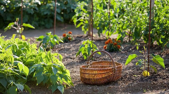 35658-5-conseils-jardiner-sans-trop-fati