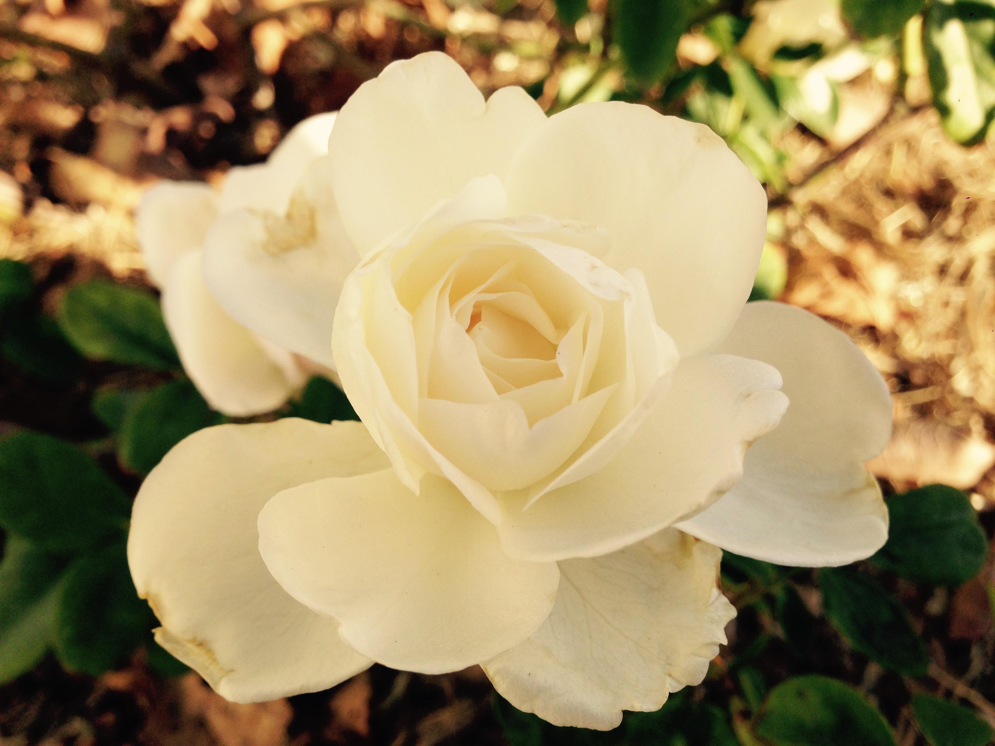 pretty flower from a sweet man.