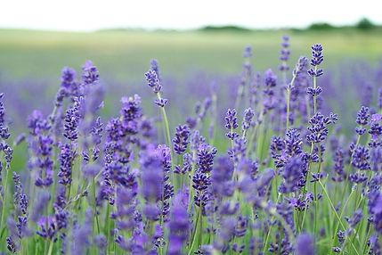 Herbalist, Herbalism, Herbal Medicine, Kerry Caudwell