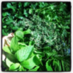 Fresh Herbs, Herbalism, Plant Food