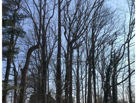 Save the Centennial Woods