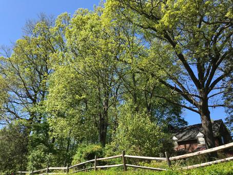 Centennial Woods Threatened by Development