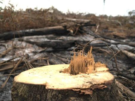 Death Sentence for Centennial Woods