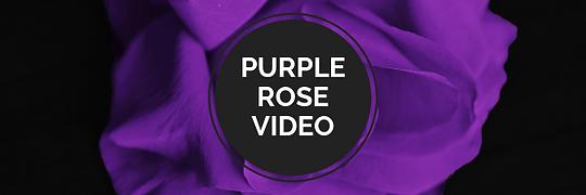Purple Rose Video.png