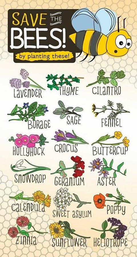 save bees.jpg