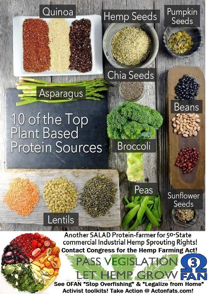 mm plant proteins.jpg