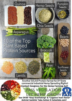 mm plant proteins.jpg