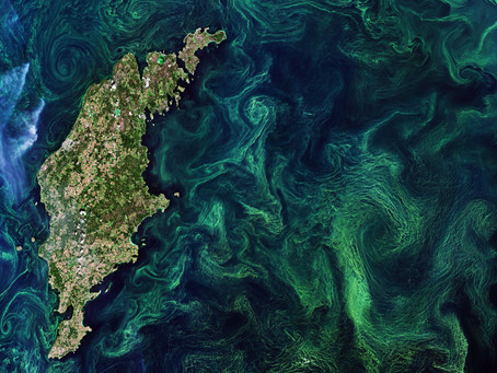 Suivre la qualité de l'eau et la biomasse  de l'océan grâce aux données satellites