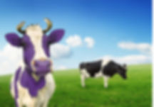 What does being a purple cow mean?