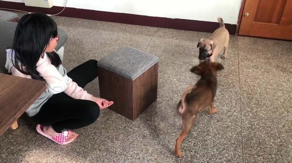 Zuri and Deffy(brown) interact with kid(