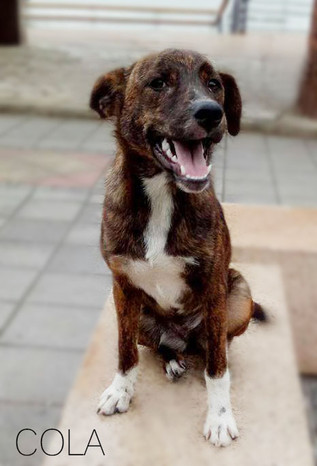 Cola - Waiting for a Home